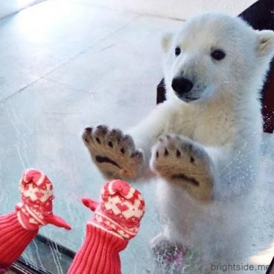 아기 북극곰 따뜻한 마음