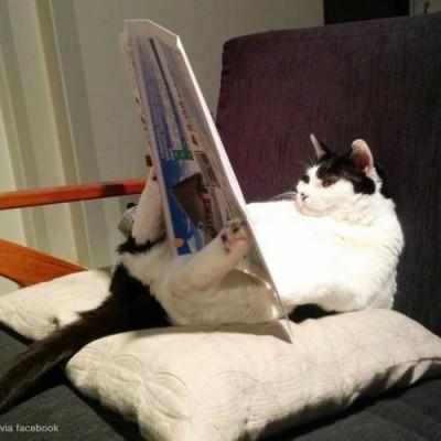 글을 읽는 고양이
