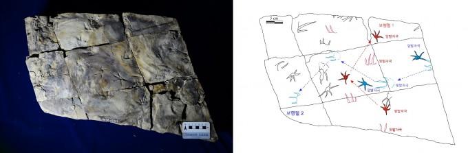 진주혁신도시에서 발견된 악어 발자국 화석 표본(왼쪽)과 분포도(오른쪽)다. 김경수 교수 제공