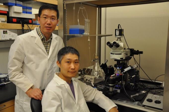 조준형  미국 리버사이드 캘리포니아대 교수(왼쪽)와 김웅빈 연구원이 뇌에 공포기억이 형성되는 과정을 밝혔다. 외상후스트레스장애 등을 치료할 단서가 될 것으로 기대된다.