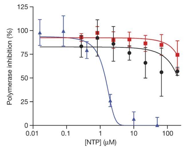 에볼라 임상시험 과정에서 렘데시비르의 안전성이 입증돼 승인이 되지 않은 약물임에도 연초 우한의 코로나19 환자들에게 투여될 수 있었다. 렘데시비르는 바이러스의 RNA중합효소(polymerase)를 교란해 증식을 막는다. 그래프 가로축은 약물(활성 형태인 NucTP) 농도이고 세로축은 중합효소의 활성이다(inhibition은 activity의 오기로 보인다). 바이러스의 중합효소는 치료제 처방 수준의 농도에서 활성이 뚝 떨어지지만(파란색) 사람의 핵 게놈 중합효소(검은색)와 미토콘드리아 중합효소(빨간색)는 거의 영향을 받지 않는다. 네이처 제공