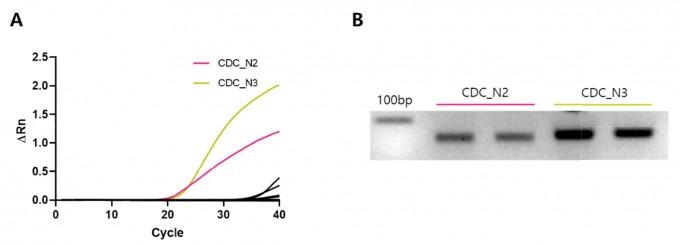CDC가 개발한 N2와 N3 진단키트는 바이러스가 없음에도 형광 반응(Rn)을 보이는 것으로 나타난다. 전기영동 검사를 실시했을 때도 N2와 N3는 유전자 증폭이 일어났음을 확인할 수 있다. 실험신경생물학 제공