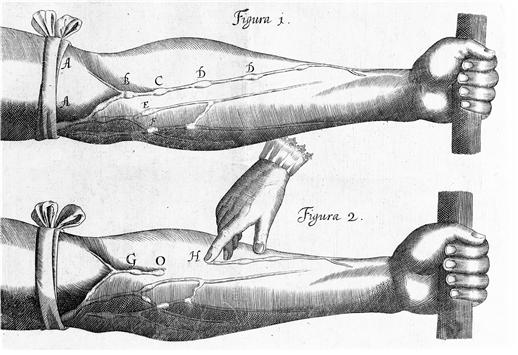 윌리엄 하비가 행한 결찰사 실험. 위키피디아 제공