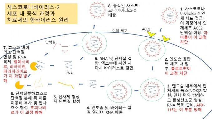 최근 유망하게 임상시험이 이뤄지고 있는 코로나19 치료제 후보를 사스코로나바이러스-2의 세포 내 침투와 함께 표현했다. 다양한 전략으로 바이러스 활성을 막고자 하지만, 아직 확실한 효과를 보이는 치료제 후보는 없는 게 현실이다. 윤신영 기자