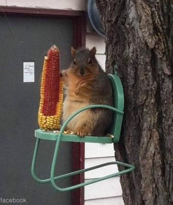 초고도 비만 다람쥐