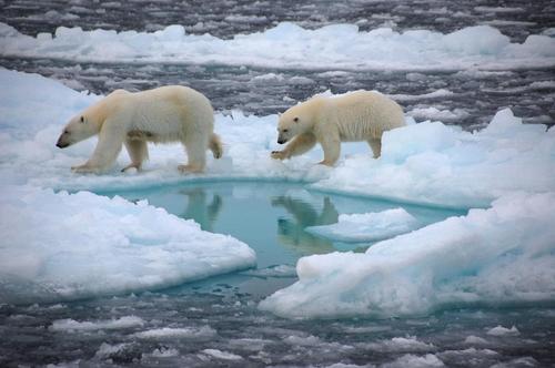 '얼음 없는 북극 여름' 2050년 이전 현실화 예측