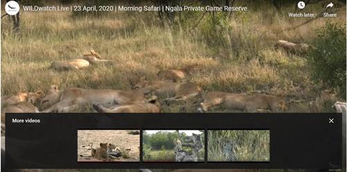 '아프리카 사파리를 안방에서' 실시간 온라인 제공