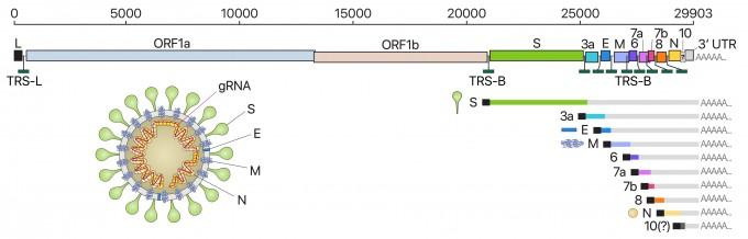국내 연구진, 세계에서 가장 정밀한 코로나19 바이러스 유전자 지도 공개