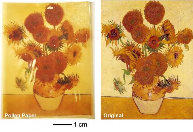조남준 싱가포르 난양공대 교수팀이 꽃가루를 가공해 종이를 만드는 데 성공했다. 실험실에서 만든 꽃가루 종이지만, 반 고흐의 해바라기 그림을 인쇄한 결과(왼쪽), 일반 종이에 인쇄한 것에 버금가는 인쇄 품질을 보여줬다. 조남준 교수 제공