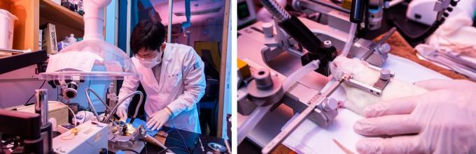 이보름 교수 연구실에서 연구하는 다양한 생체신호 연구 중 하나인 전극을 통한 신경 신호 측정 실험 모습이다. 동물을 이용해 진행한다. 동아사이언스 제공