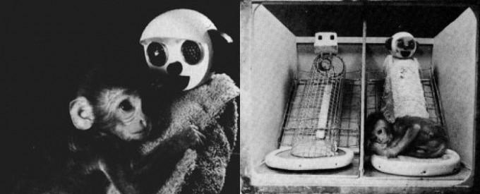 해리 할로우의 가짜 원숭이 실험. 새끼 원숭이는 철사 엄마(왼쪽)와 헝겊 엄마(오른쪽) 중 포근한 품을 가진 헝겊 엄마에게 더 애착을 보였다. 위키피디아 제공