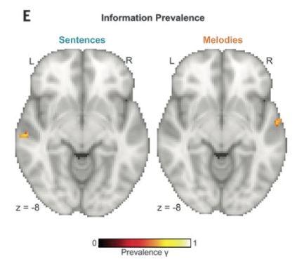 시간 분해능과 주파수 분해능을 점차 떨어뜨리는 실험을 통해 청각피질의 A4 영역에서 정보 처리의 편측성이 두드러진다는 사실이 밝혀졌다. 즉 좌뇌 A4 영역(왼쪽 노랑~빨강 부분)은 노래의 문장 처리에 특화돼 있고 우뇌 A4 영역(오른쪽 노랑~빨강 부분)은 멜로디 처리에 특화돼 있다. 사이언스 제공