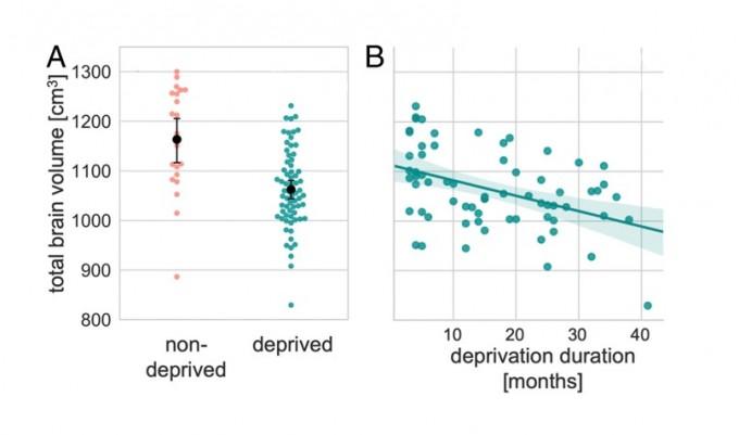 불우한 유년기를 보낸 이들(초록색)의 뇌 부피는 그렇지 않은 이들에 비해 약 8.6% 작은 것으로 나타났다. 또한 불우하게 지낸 시간이 길수록 뇌 부피가 더 많이 감소하는 경향이 있음이 확인됐다. Mackes et al., 2020/ IBS 제공