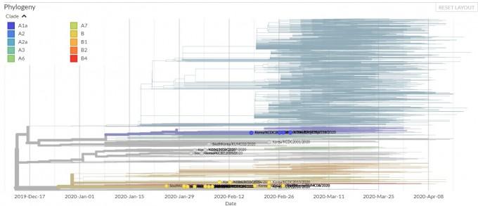 한국이 제공한 34개 게놈 정보를 바탕으로 바이러스 계통군으로 분류했다. 굵게 표시된 게 한국의 바이러스이며, 주황색은 아시아 타입인 B형이다. 위쪽에 파란색으로 표시된 바이러스가 A1a 타입이다. 평택 미군기지에서 감염이 일어나 주변에 일부 퍼진 것을 알 수 있다. 학자들은 ″표본이 적어 편향이 있을 수 있으므로 ′일부 지역감염이 있었다′는 정도의 의미일 뿐″이라고 강조했다. 넥스트스트레인 화면 캡쳐