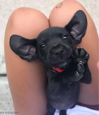보석 같은 눈을 가진 강아지 '인기'