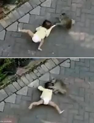 아기를 납치하는 원숭이 '포착'
