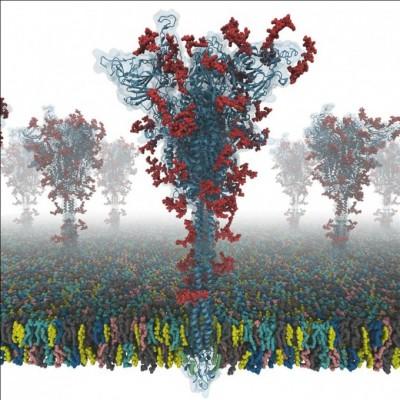 가장 정밀한 코로나19 바이러스 스파이크 단백질 구조 밝혀졌다