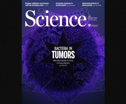 [표지로 읽는 과학]암세포 내부의 미생물 다양성을 밝히다