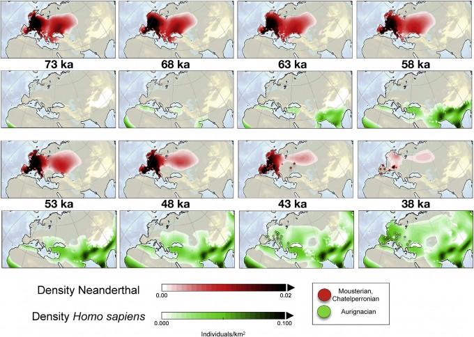 컴퓨터 시뮬레이션 모형으로 7만 3000년 전부터 3만 8000년 전까지의 네안데르탈인의 인구 밀도(붉은색 영역)와 현생인류의 인구밀도(초록색 영역)를 비교했다. 네안데르탈인이 급격히 사라진 시점은 4만 3000~3만 8000년 전 사이다. 이는 현생인류가 급격히 유럽에 퍼져나간 시점 직후다. 오렌지색 점은 네안데르탈인의 중기구석기 유적(무스테리앙, 샤텔페로니앙)이 발견된 곳이고 녹색은 현생인류의 후기구석기 유적(오그나시옹)이 발견된 곳이다. 신생대 제4기 과학 리뷰 논문 캡쳐