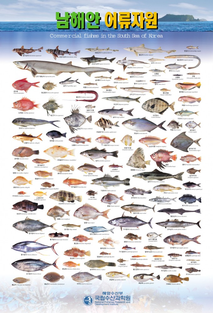국립수산과학원이 제작한 남해안 어류자원도 포스터. 국립수산과학원 제공