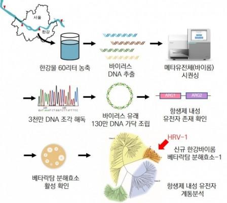 한강서 세균에 항생제 내성 옮기는 신종 바이러스 발견