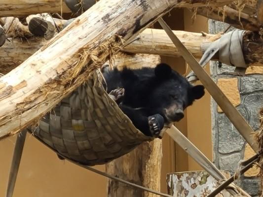[슬기로운 동물원 생활]반달가슴곰 세 마리가 함께 살게 된 사연