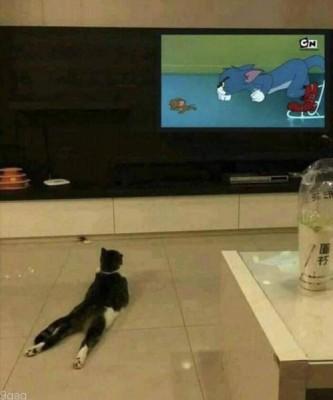 TV 속 고양이를 응원하는 고양이