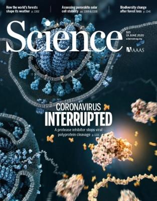 [표지로 읽는 과학]코로나19 바이러스 증식 막는 치료제