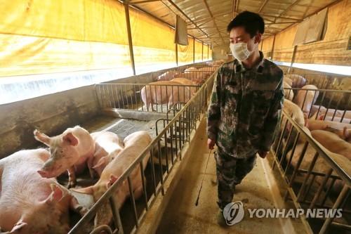 중국서 '팬데믹 가능성' 신종 돼지독감 바이러스 발견