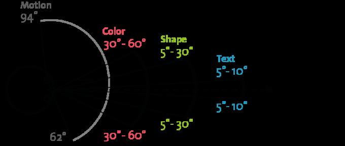 우리 눈이 볼 수 있는 영역인 시야의 좌우 시야각은 180~210도다. 그림에서는 188도로 왼쪽 눈의 시야만 묘사했다. 이에 따르면 시야 양쪽 끝 62~94도 범위는 한쪽 눈만 볼 수 있다. 비록 시야는 꽤 넓지만 과제에 따라 실질적인 시야는 줄어든다. 예를 들어 글자를 읽을 수 있는 각도는 시선 방향에서 5~10도 이내, 형태는 5~30도 이내, 색은 30~60도 이내로 알려져 있다. 최근 색 지각 실험 결과 색 지각 범위는 이보다 더 좁은 것으로 밝혀졌다. 위키피디아 제공