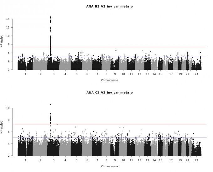코로나19 환자유전학이니셔티브 연구팀의 연구 결과 중 일부다. 위는 입원환자와 정상인을 연구한 데이터를 모아 분석한 메타분석 결과이고 아래는 경증까지 포함한 환자와 정상인을 비교한 결과다. 가로는 염색체 별 염기서열 영역이고 점은 주요 변이(단일염기다형성)다. 변이 빈도가 높으면 길어진다. 세로축의 길이는 통계적 유의미성을 평가하는 P값의 역서를 로그화한 수치로, 높을수록 해당 염기서열 영역이 표현형(여기서는 코로나19 감염)과 통계적으로 상관관계가 높다는 뜻이다. 가로 빨간선이 GWAS에서 통계적 의미가 있다고 여겨지는 한계 P값인 10억 분의 5다. 이를 넘어서는 염기서열 영역은 3번 염색체 3p21.31뿐이고, ABO 혈액형 유전자가 위치한 9q34.2는 관련이 적은 것으로 나타났다. 코로나19 환자유전학이니셔티브 홈페이지 제공