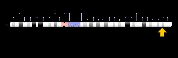 9q34.2 영역의 위치를 9번 염색체 위에 표시했다. 9번 염색체의 끝 부분인 1억3325만401~1억 3327만5201번 염기서열에 해당한다. NIH 제공