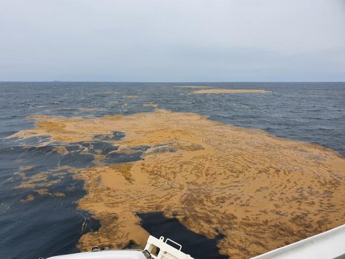 국립수산과학원이 동중국해 조사 중 발견한 괭생이모자반 띠의 모습이다. 조사 과정에서 최대 50m 지름의 넓은 괭생이모자반 띠가 발견되기도 했다. 국립수산과학원 제공