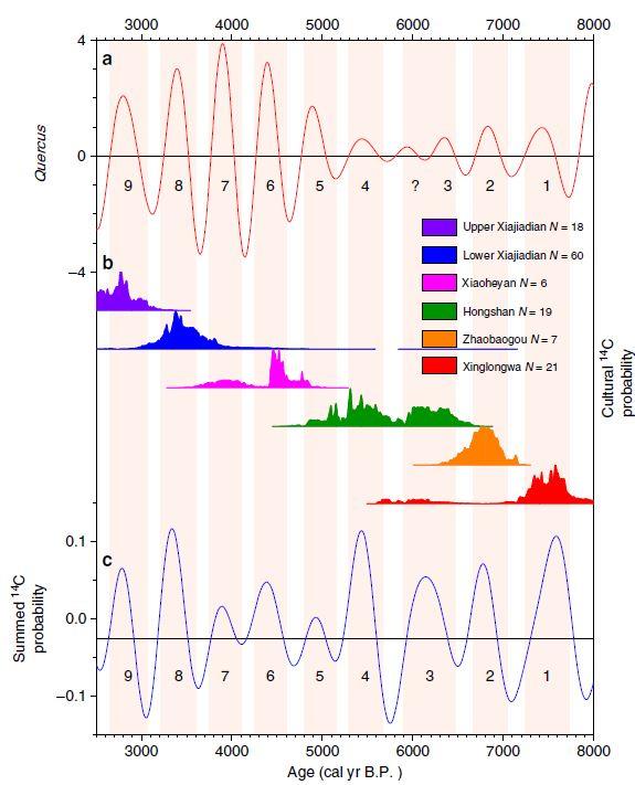 백두산 북서쪽 300㎞에 있는 샤오룽완 호수 퇴적층에 포함된 참나무(Quercus) 꽃가루 양 분석 데이터 그래프(위)와 네이멍구자치구와 랴오닝성 일대의 신석기・청동기 유물 방사성탄소연대측정 시료 양을 보여주는 그래프(아래)는 2500~8000년 전 기간 동안 거의 일치하는 대략 500년의 주기성을 보인다. 가운데는 이 시기 존재한 6개 문화다. 네이처 커뮤니케이션즈 제공