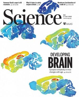 [표지로 읽는 과학]나이를 먹으며 바뀌는 뇌 시냅스의 복잡성