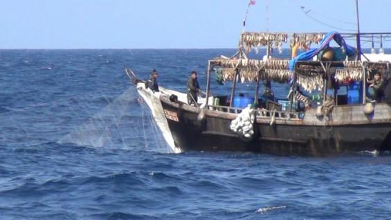 위성으로 동해 북측 수역서 불법조업한 중국 어선 1600척 추적...5260억원 규모
