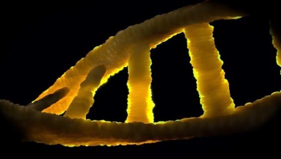 [강석기의 과학카페] 미토콘드리아 게놈 편집 성공했다