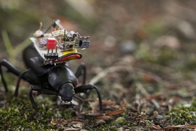 세계 최초 곤충 액션캠이 촬영한 세상 모습