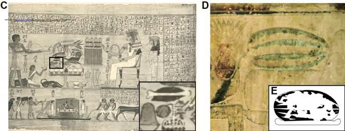 고대 이집트 벽화에는 수박이 등장해 인류가 늦어도 4000년 전에는 수박을 작물화해 과일로 먹었음을 시사한다. 실제 3500년 전 미라를 깔던 수박 잎의 게놈을 분석한 결과 오늘날 수박과 비슷한 맛과 색을 지녔다는 결과가 나왔다. 뮌헨대 제공