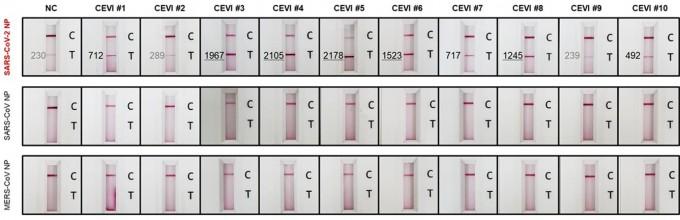 코로나19 바이러스 감염을 임신진단키트처럼 두 줄로 확인할 수 있는 기술이 개발됐다. 과학기술정보통신부 제공