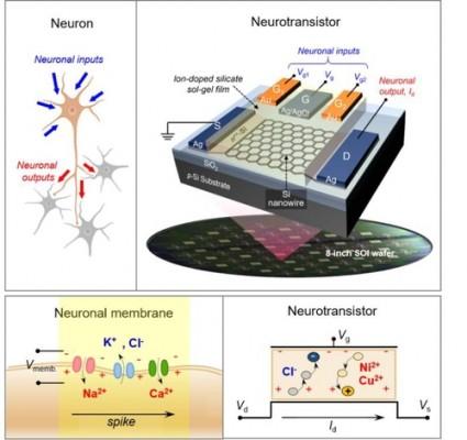 전북대 김기현 교수, 인간 뇌 닮은 '뉴로모픽 소자' 개발