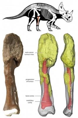 '공룡도 암에 시달렸다'…공룡화석서 골육종 흔척 첫 확인