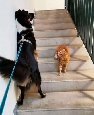 고양이가 무서운 겁쟁이 개