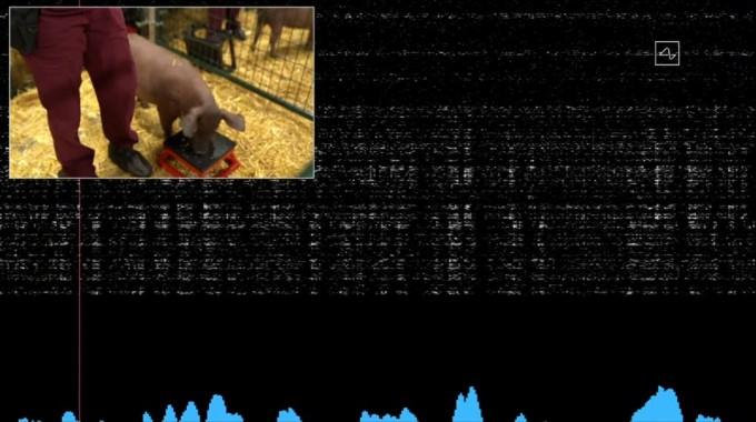 거투르드가 주둥이를 이용해 냄새를 맡자 신호가 컴퓨터로 전송되고 있다. 유튜브 캡처