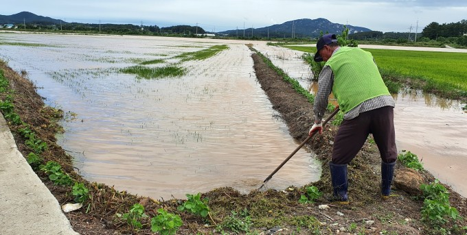 24일 충남 태안군 근흥면 안기리 논에서 한 농민이 폭우로 유입된 물을 빼고 있다. 태안에는 23일 새벽부터 하루 사이 199.5㎜의 비가 내렸다. 연합뉴스