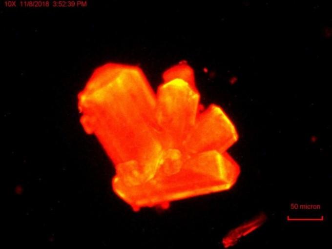 미국과 독일 공동연구팀이 고압상태에서 퀴륨 결정을 420nm(나노미터) 파장으로 촬영한 사진. 압력이 높으면 퀴륨의 화학적 성질이 바뀐다는 게 밝혀졌다. 플로리다 주립대 제공