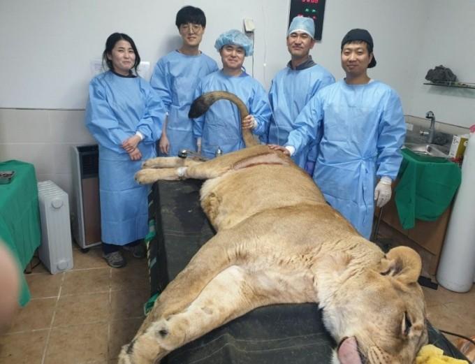 함께한 의료진들. 청주동물원 제공