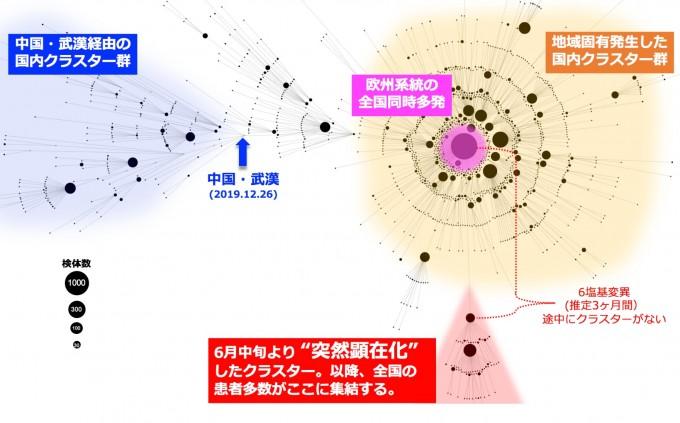 일본 국립감염증연구소가 5일 발표한 일본 내 코로나19 바이러스 게놈 계통도다. 7월 중순까지 수집된 3700여 개의 게놈을 해독해 변이 수와 유형을 바탕으로 네트워크를 그렸다. 중국 우산에서 발발한 유형(파란색)과 유럽형(노란색)이 차례로 유행한 가운데, 일본 도쿄를 중심으로 6월 중순부터 새로운 변이의 바이러스가 유행하고 있는 것으로 확인됐다(빨간색). 다만 중간 연결고리가 발견되지 않아 조용한 전파가 3개월간 일어났을 가능성이 제기됐다. 일본 국립감염증연구소 제공