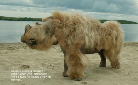 털코뿔소 멸종은 인간 아닌 '이것' 때문