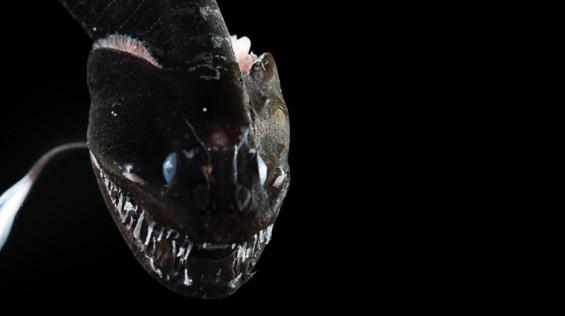 [프리미엄 리포트] 세계 최강 '울트라 블랙' 생명체
